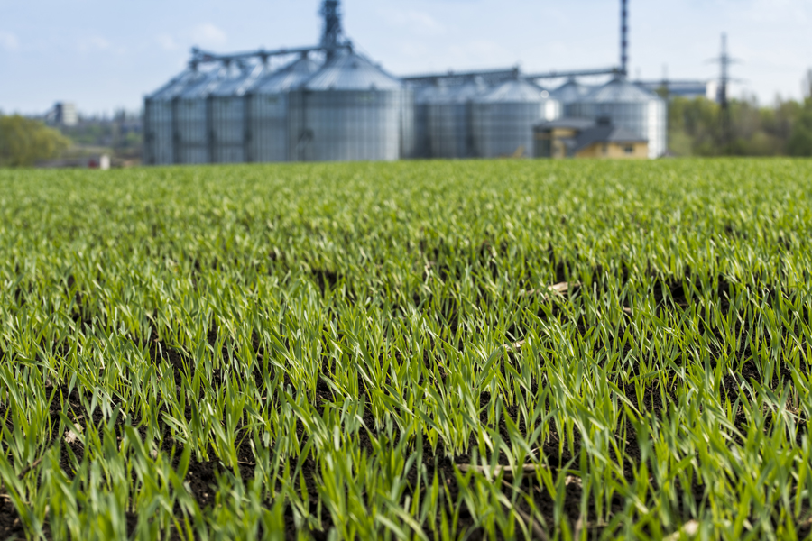 New Grain Facility Yields Access to Global Markets